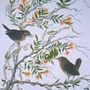 Carolina Wren And Jasmine Print by Ben Kiger