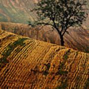 Carpet Fields Of Moravia Art Print
