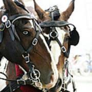Carriage Horse - 3 Art Print