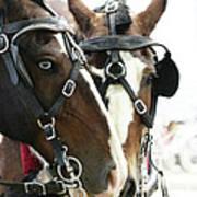 Carriage Horse - 4 Art Print