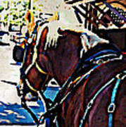 Carriage Horse Art Print