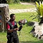 Cartoon - A Trainer And A Large Bird Of Prey At A Show Inside The Jurong Bird Park Art Print