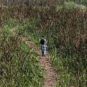 Cartoon - Man Walking Through Tall Grass In The Okhla Bird Sanctuary Art Print