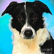 Cartoon Collection No 3 Life With A Border Collie In Usa Art Print