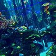 Casablanca Aquarium Close-up Art Print