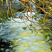Cascade Cedar Art Print