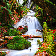 Cascade Creek Art Print by Randy Giesbrecht