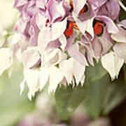 Cascade Of Flower Art Print