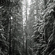 Cascade Snow Art Print