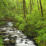Cascading Stream In The Woods Art Print by Andrew Soundarajan