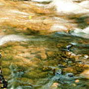 Cascading Waters Art Print