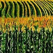 Cash Crop Corn Art Print