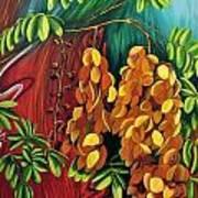 Cassia Art Print