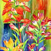 Castilleja Indivisa Art Print