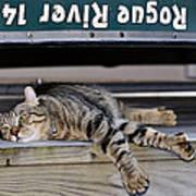 Cat And A Canoe Art Print
