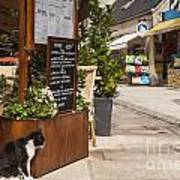 Cat And Restaurant Concarneau Brittany France Art Print