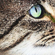 Cat Art - Looking For You Art Print by Sharon Cummings