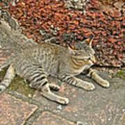 Cat At Wat Mahathat In 13th Century Sukhothai Historical Park-th Art Print