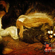 Cat Catnapping Art Print