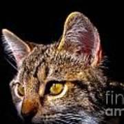Cat Eyes Art Print