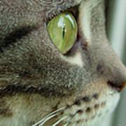 Cat Face Profile Art Print