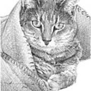 Cat In A Blanket Pencil Portrait  Art Print