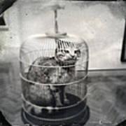 Cat In Cage Art Print