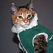 Cat In Patrick's Coat Art Print