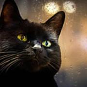 Cat In The Window Print by Bob Orsillo
