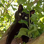 Cat In Tree Art Print