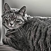Cat In Window Art Print