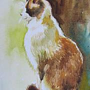 White And Brown Cat Art Print