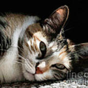 Cat Napping In The Sun By David Perry Art Print