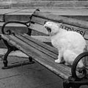 Cat On A Bench Art Print