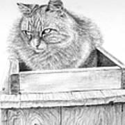 Cat On A Box Art Print