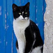 Cat On A Greek Island Art Print