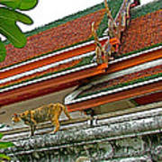 Cat On A Wat Po Roof In Bangkok-thailand Art Print