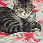 Cat On Quilt  Art Print