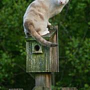 Cat Perched On A Bird House Art Print