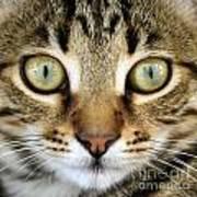 Cat Portrait Macro Shot Art Print