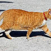 Cat Walk Art Print