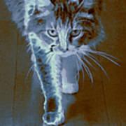 Cat Walking Art Print