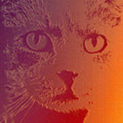 Cat With Intense Stare Abstract  Art Print