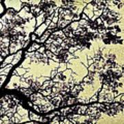 Catalpa Tree Gold Art Print