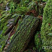 Cataracts Canyon Mossy Log  Art Print
