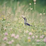 Catbird In The Wildflowers Art Print