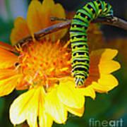 Caterpillar On The Prowl Art Print