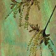 Catkins -- Tree-flowers Art Print