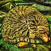 Catnappin' On A Cold Rainy Sunday Art Print