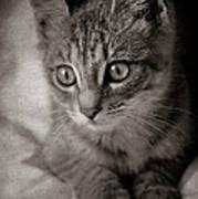 Cat's Eyes #05 Art Print